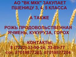 АО ВК МКК закупает пшеницу 3, 4, 5 класса