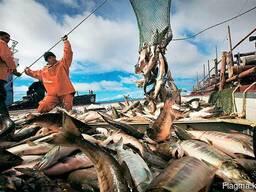 Большой ассортимент рыбы и морепродуктов с Дальнего востока