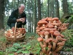 """Экотур """"За грибами Заилийского Алатау"""""""
