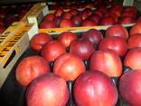 Фрукты и овощи из Испании . Прямые поставки. - фото 3