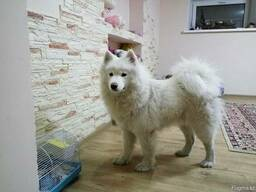 Гостиница для собак happydogs