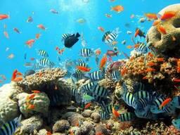 Изготовление и обслуживание морских аквариумов.