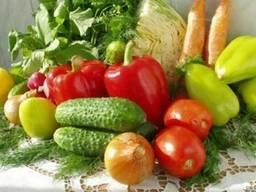 Капельный полив овощных культур, лук, картофель под ключ.