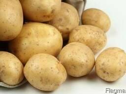 Картофель 1 класс