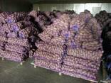 Картофель из Беларуси экспорт - фото 2
