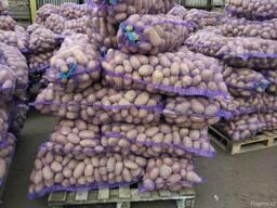 Картофель из Беларуси экспорт - фото 6