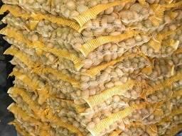 Картофель из Беларуси экспорт