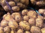 Картофель Оптом ЗКО - фото 1
