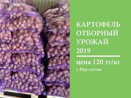 Картошка ОПТОМ картофель свежий урожай со склада