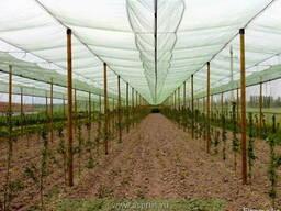 Колья оцилиндрованные, столбы виноградные, палисады - фото 2