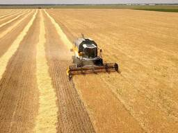 Крестьянское хозяйство направление: растениеводство