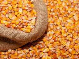 Кукуруза Бразилия CIF