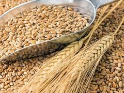 Куплю пшеницу 3.4.5 класса, ячмень, сафлор. - photo 4