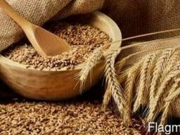 Куплю пшеницу 4 класса
