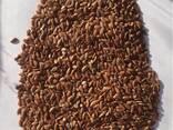 Куплю семена льна - фото 1