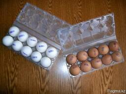 Яйца оптом от Птицефабрики. Категория первая