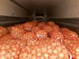 Лук оптом 34 тонн из Казахстана