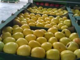 Молдавские яблоки на Павлодар