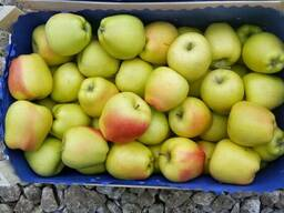 Продам яблоки молдавский голден на Казахстан