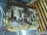 Мёд цветочный - фото 1