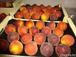 Нектарин и персик из Испании. Прямые поставки. - фото 2