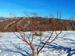Обрезка деревьев. Яблони, Груши и другие деревья.
