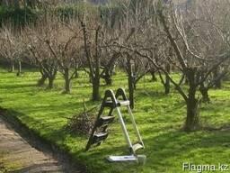 Обрезка плодовых деревьев в Алматы
