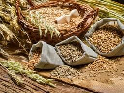 Оценка качества зерна