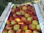 Овощи и фрукты из Узбекистана - фото 3