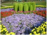 Озеленение благоустройство территории газон укладка посадка - фото 4