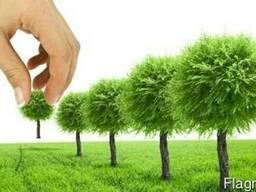 Озеленение цветники газоны