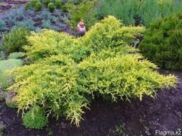 Питомник растений саженцы деревья цветы