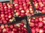 Польские Яблоки - фото 2