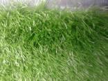 Полузасыпная искусственная трава - фото 1
