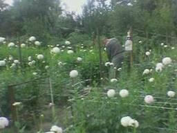 Поможем организовать цветочные плантации-теплицы Консультаци