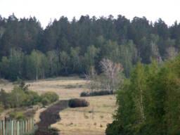 Продается земельный участок рядом с сосновым лесом г. Щучинс