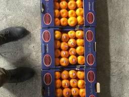 Продам Апельсин мандарин киви Гранат