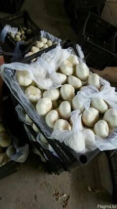 Продам чеснок свежий, Узбекистан 2017