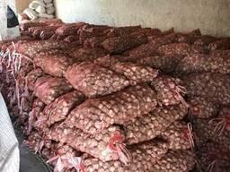 Продам чеснок Узбекистан 2017