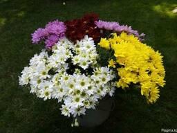 Продам долю бизнеса по выращиванию цветов-Прибыль до 1000% с