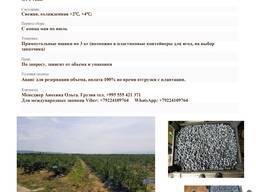 Продам голубику с плантации