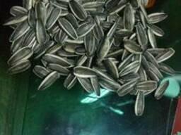 Продам грызовые семечки подсолнечника