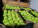 Продам яблоки из польши - фото 7