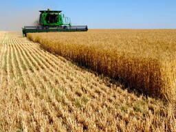 Продам ячмень, пшеницу