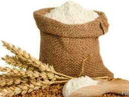 Пшеница 3-4 классов
