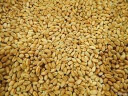 Продаем Пшеницу 3 класс и 4 класс