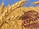 Пшеница CIF FOB - фото 1