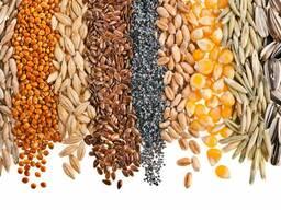Пшеница Семечки соя ячмень