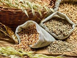 Реализация всех видов зерновых