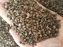 Реализация зерновых и масличных культур